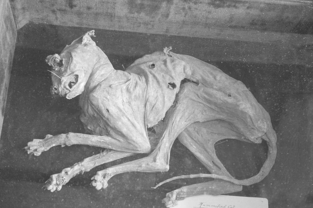 The 700-year-old mummified cat – £150