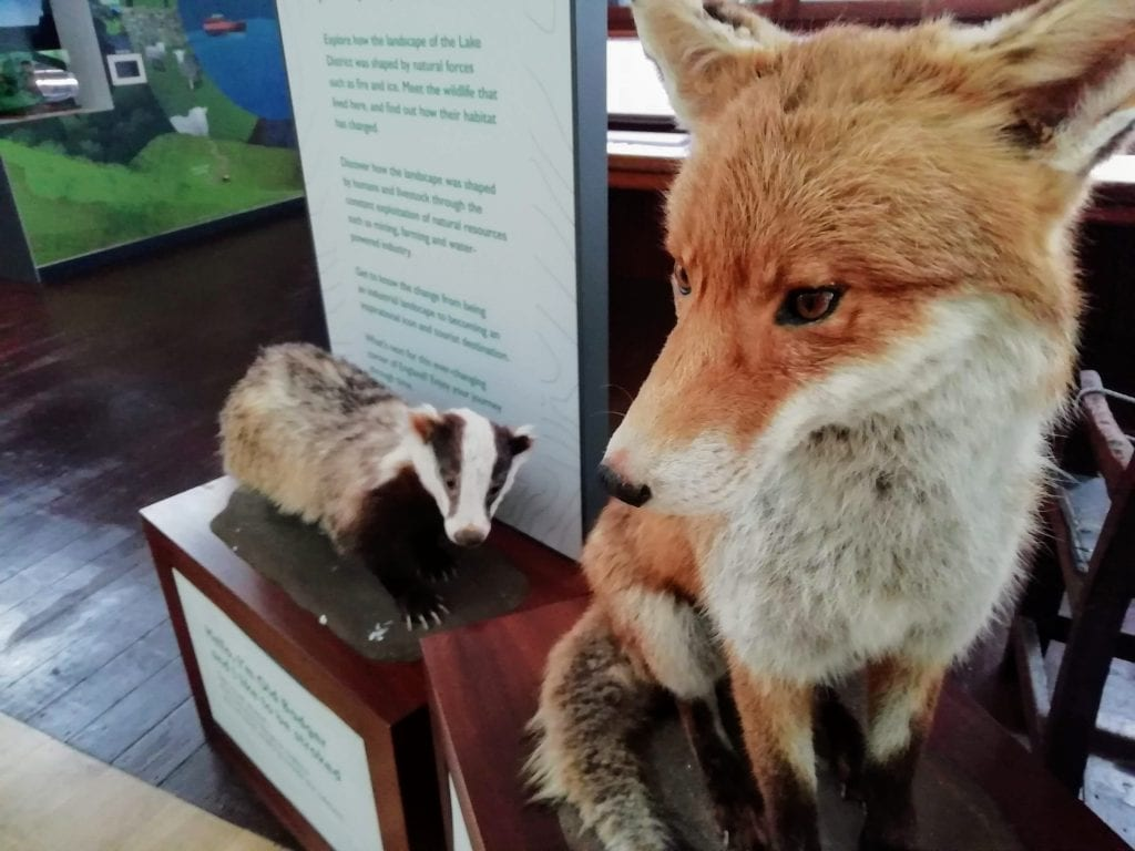 Mr Fox and Old Badger – £20