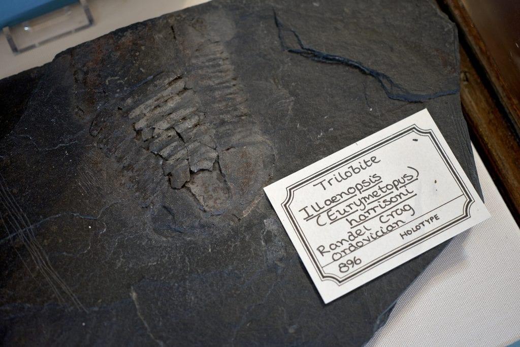 A Trilobite fossil – £15